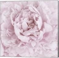 Pink Peony Flower Fine-Art Print