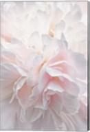 Pink Peony Petals IV Fine-Art Print