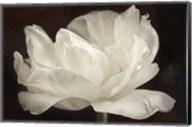 White Tulip III Fine-Art Print