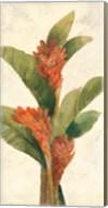 Ginger Blossom on White Fine-Art Print