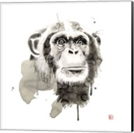 Chimp Fine-Art Print