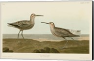 Long-Legged Sandpiper Fine-Art Print