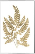 Graphic Gold Fern II Fine-Art Print
