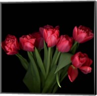 Red Tulips 6 Fine-Art Print