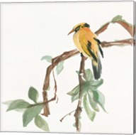 Black Napped Oriole Fine-Art Print
