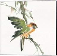 Formosan Firecrest Fine-Art Print