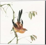 Mountain Bush Warbler Fine-Art Print