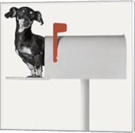 You've Got Mail Fine-Art Print