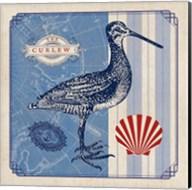 Sea Bird III Fine-Art Print