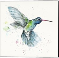 Hummingbird Flurry Fine-Art Print