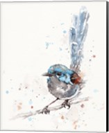 Mischief in the Making (Variegated Fairy Wren) Fine-Art Print