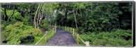 Tea Garden Walkway, San Francisco Botanical Gardens Fine-Art Print