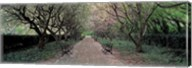 Through Conservatory Garden, Central Park, NYC Fine-Art Print