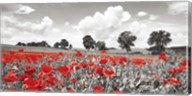 Poppies and Vicias in Meadow, Mecklenburg Lake District, Germany Fine-Art Print
