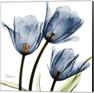 New Blue Tulips C54 Fine-Art Print