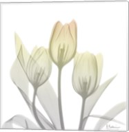 Sunday Morning Tulips Two Fine-Art Print