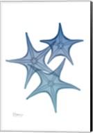 Tidal Starfish 2 Fine-Art Print