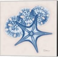 Cerulean Starfish and Sand Dollar Fine-Art Print