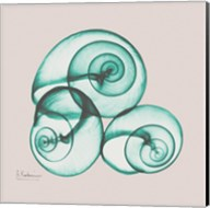 Shamrock Sky Snails Fine-Art Print