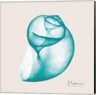 Viridian Water Snail Fine-Art Print