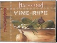 Vine Ripe Fine-Art Print