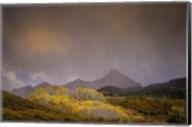 Mountain Aspens Fine-Art Print