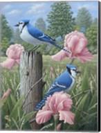 Blue Jays Fine-Art Print