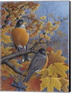 Robins Fine-Art Print