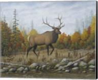 Autumn Elk Fine-Art Print