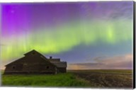 Purple Aurora over an old barn, Alberta, Canada Fine-Art Print