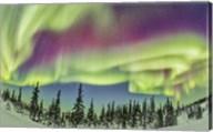 Aurora borealis over Churchill, Manitoba, Canada Fine-Art Print