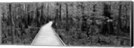 Boardwalk passing through a forest, Congaree National Park, South Carolina Fine-Art Print