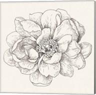 Pen and Ink Florals IV Fine-Art Print