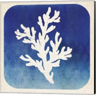 Watermark Coral Fine-Art Print