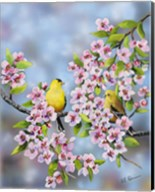 Finches In Cherry Tree Fine-Art Print