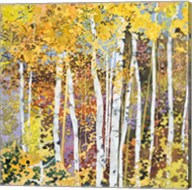 Autumn Birches III Fine-Art Print