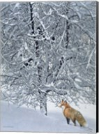 Fox In Snow Fine-Art Print