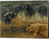 Lioness And Cape Buffalos Fine-Art Print