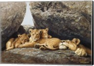 Lioness With Cubs Fine-Art Print