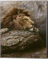 Lion Male 2 Fine-Art Print