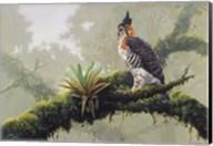 Ornate Hawk - Eagle Fine-Art Print