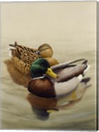 Mallard Fine-Art Print
