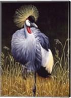 Crowned Crane Fine-Art Print