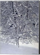 Snow Tree With Magpies Fine-Art Print