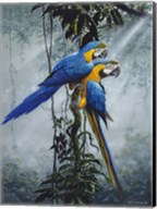 Blue And Yellow Macaws 2 Fine-Art Print