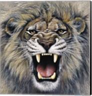 Lion Fine-Art Print