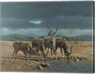 Greater Kudus Fine-Art Print
