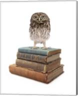 Owl And Books Fine-Art Print
