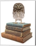 Owl And Books Fine-Art Print