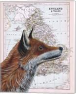 British Fox Fine-Art Print